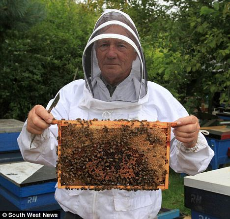 Will The 'Swindon Super Bee' Save Our Honeybees?