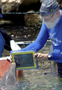 Using The iPad To Communicate With Dolphins