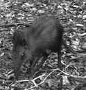 Scientists Discover New Species Of Elephant Shrew