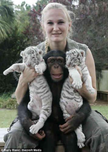 Chimp Makes Great Surrogate Mum