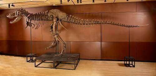Now Available: 'Samson', A 66 Million Year-Old T-Rex