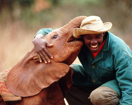 Elephant Orphanage In Kenya, Africa