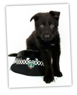 Meet the newest (and cutest) member of Scotland's Police Force