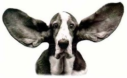 A best selling compact disc - that only your dog can hear!