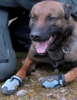 German Police Dogs To Wear Shoes