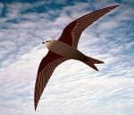It's a bird, It's a plane - It's a RoboSwift