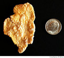 Examine that frosted flake - it could be worth some money!