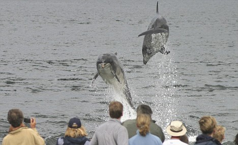 The Flying Dolphins of Moray Firth
