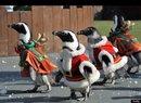 Santa Penguins Bring Christmas Cheer To South Korea