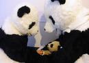 Pandabears3
