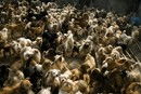 Animal Lover Adopts 1,500 Dogs And 200 Cats!