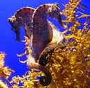 How The Seahorse Got Its 'Curves'