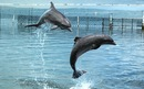 Scientists And Dolphins Learn How To 'Talk' To Each Other