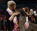 'Underdog' Takes Top Honors At Westminster Dog Show