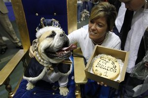 Pearl-Decked Lucy Brown is America's 'Most Beautiful Bulldog'
