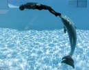 Spinning With Dolphins