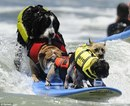 Surfer Dogs Take Over San Diego's Imperial Beach