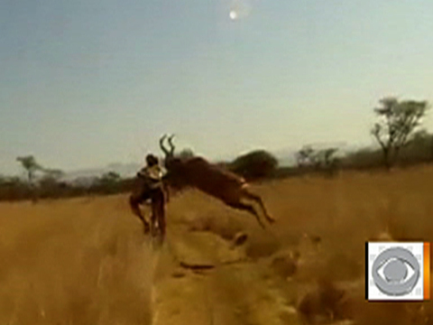 Video Of The Week - Antelope Takes Out Racing Cyclist