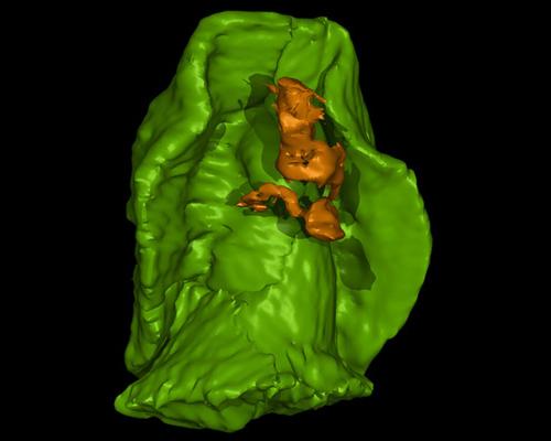 Scientists Recreate 3D Image Of Ancient Sea Creature