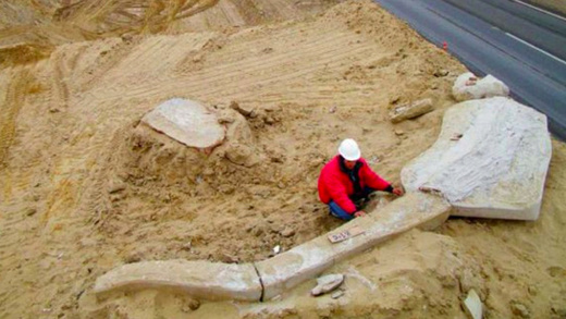 Graveyard Of Pre-Historic Whales Unearthed In World's Driest Desert