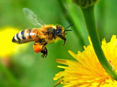 Bee List Soldier Photo by TagForcePart2 | Photobucket