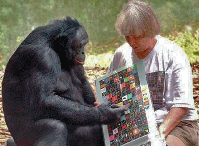 Kanzi The World S Smartest Ape Kids News Article