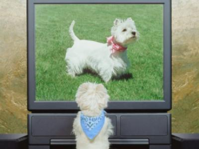 Cable Television Goes To The Dogs - No, Really!
